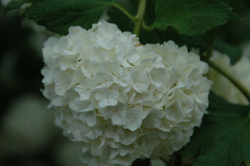 dax fleur blanche dans location saisonnière de maison de vacances à la campagne