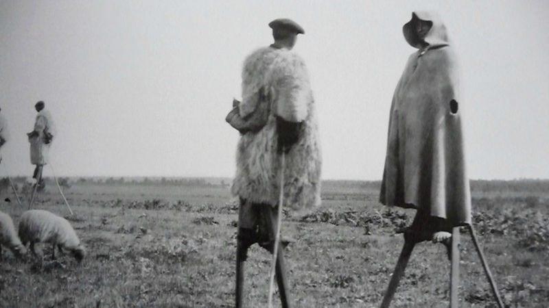 Echassiers landais dans la fôret de Gascogne